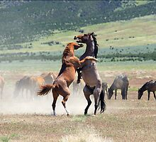 Wild Struggle by Gene Praag