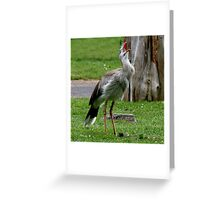 Silly Bird Greeting Card