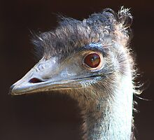 The Emu by jdmphotography