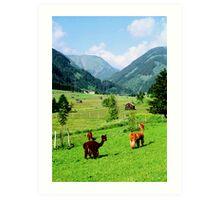 Tirol Llamas Art Print