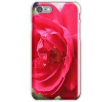Rose in Full Bloom iPhone Case/Skin