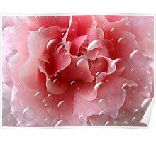 Rose Bubbles Poster