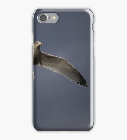 Herring Gull iPhone Case/Skin