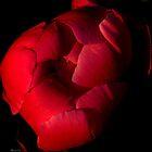 soft glow by Laura Thai