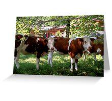 Cowbells, Cow Belles and Bulls Greeting Card
