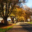 Golden Avenue by Wildpix