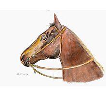 Equus Photographic Print