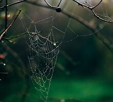 Spiders Web by samandoliver