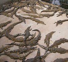 Estuary Crocodiles (NT, Australia) by Michelle Spencer