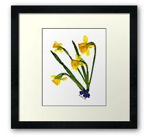 Spring Fling '06 - DAFFODILS Framed Print
