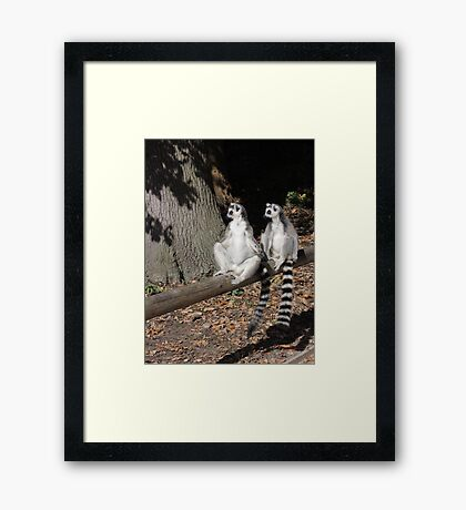 Who's Driving This Log? Framed Print