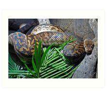 Afraid of snakes? Art Print