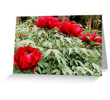 Peony Cluster Greeting Card
