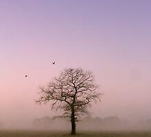 Solitude by Andrew Leighton