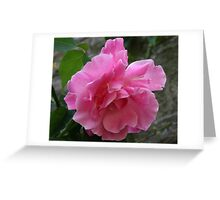The Old Rose Greeting Card