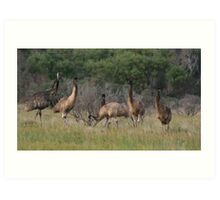 Millicent Emus Art Print