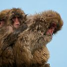 Snow Monkeys by Shannon Plummer