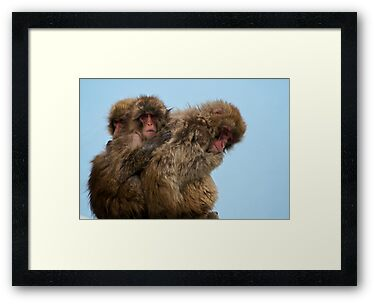 Snow Monkeys by Shannon Benson
