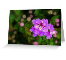 Mauve Blossoms Greeting Card