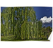 One Willow and a Cloud Poster