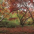 Splendid fall colors by miradorpictures