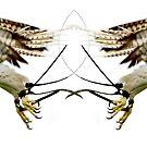 Take flight by hannahhen