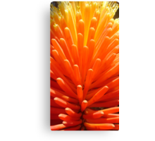 Hot Poker Up Close Canvas Print