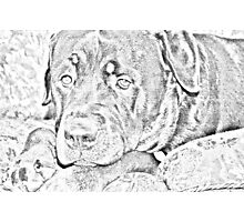 Rottweiler Photographic Print