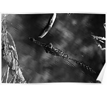 Predator Abstract Poster