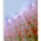 Field of Flowers  by Elaine  Manley