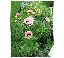 Gardeners Delight Poster