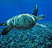 Coral reef fly by by David Wachenfeld