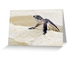 Baby green sea turtle Greeting Card