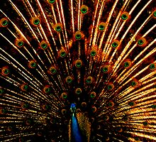 Pavo Real by picart