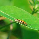 Bug of One by rarmermann