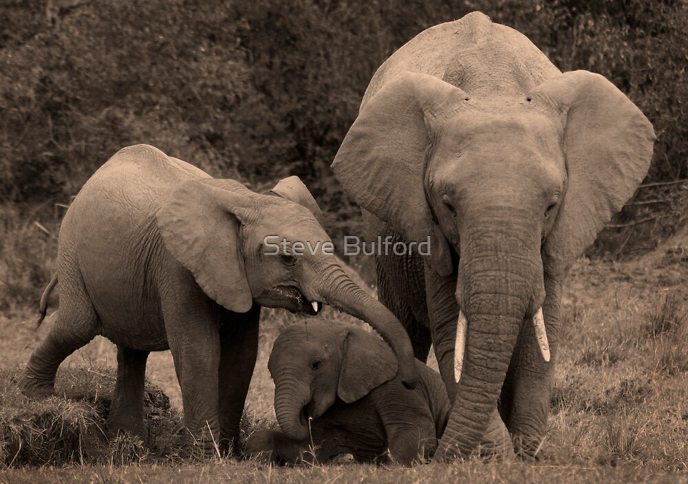 Play Time by Steve Bulford
