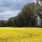 Yellow Sea #1 by hynek