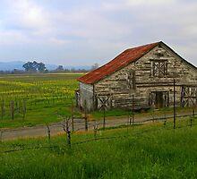 Barn Among The Vineyards by Tom  Reynen