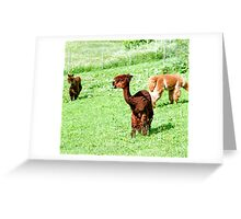 Cool Do Greeting Card