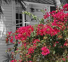 Key West Bougainvillea Colored Black and White by DreamPhotograph