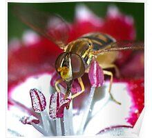 Pollen-esian Punch (2) ! Poster