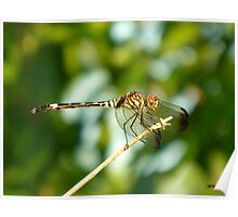 Dragonfly at the Creek Poster