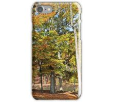 Trees and Fallen Leaves iPhone Case/Skin