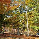 Trees and Fallen Leaves by WeeZie