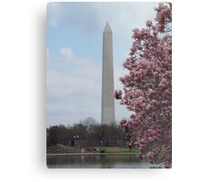 Washington Blossom Metal Print