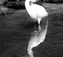 White Crane Reflection - Tokyo, Japan by Norman Repacholi