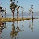 Lake Wairarapa by niggle