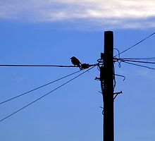 Bird on a Wire by Wayne Holman
