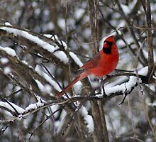 Beauty in the Snow. by Holly Schimpf