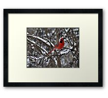 Beauty in the Snow. Framed Print